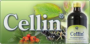gruppenbild-01_cellin